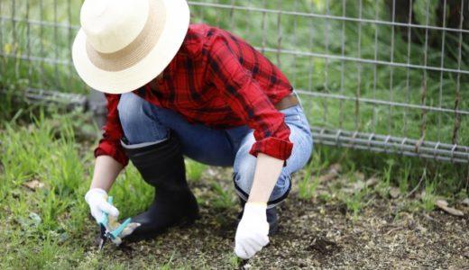 【草むしりを楽にする方法】の5つのコツを教えちゃいます!