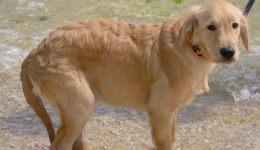 犬のしつけで重要なトイレトレーニングを成功させるポイントとコツ