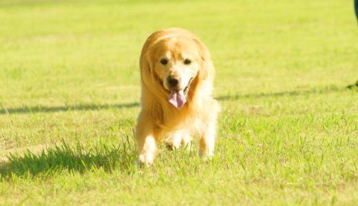 犬の飛びつきはやめさせたほうがいいの?理由と解決方法を紹介します