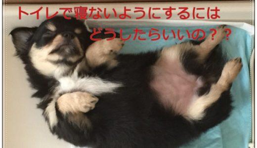 犬がトイレを寝床にする理由と寝ないようにする解決策を紹介します